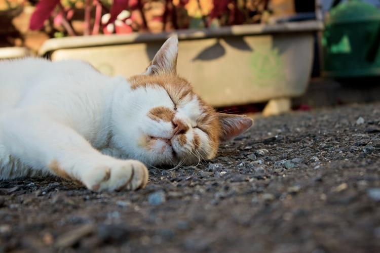 昼寝中の猫